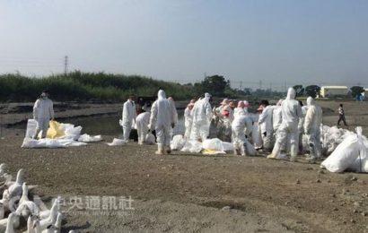 Government confirms avian flu virus case on Yunlin duck farm